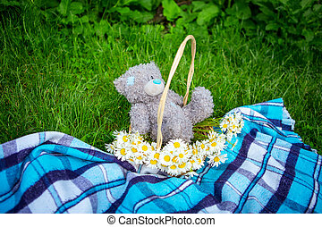 toy bear in a basket on the grass