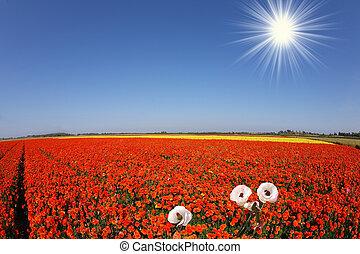 Toy bright sun shines
