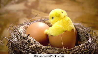 Toy chicken in a shell of egg in a nest with eggs
