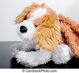 toy dog - the small brown and white toy dog