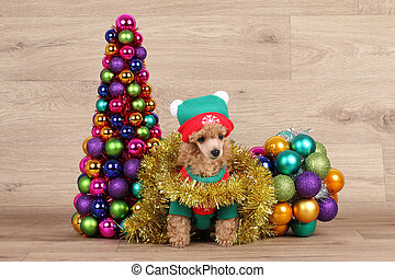 Toy poodle puppy near Christmas tree