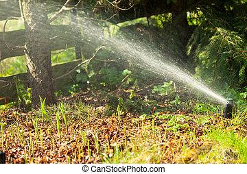 trávník, gardening., postřikovač, nad, namočit, postřikování, grass.