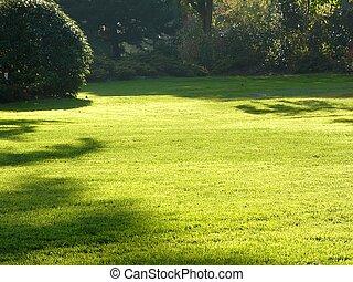 trávník, nezkušený