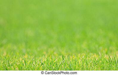 trávník, rozmazaný, -, grafické pozadí, druh