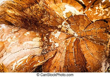 trä, gammal, struktur, bakgrund