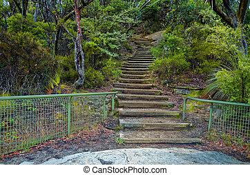 trä, trappa, på, fjäll, spåra, in, australier, buske