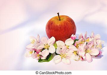 träd, äpplen, blomstringar, äpple