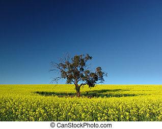träd, canola