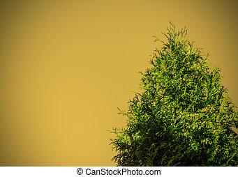 träd, cypress solnedgång