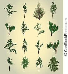 träd., design., vektor, sätta, element