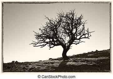 träd, ensam, mountain.