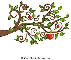 träd filial, från, en, äpple