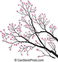 träd filial, med, rosa blommar