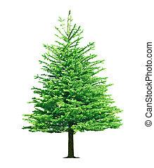 träd, fura