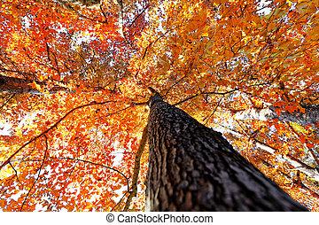 träd, genom, sol, falla, lysande
