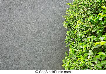 träd, grå, vägg, konkret, grön