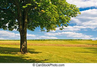 träd, in, a, fält