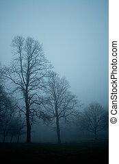 träd, in, den, dimma