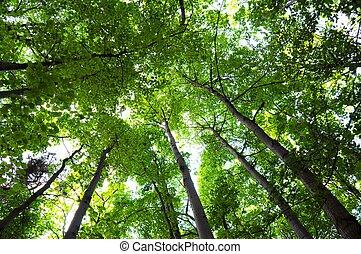 träd, in, den, veder