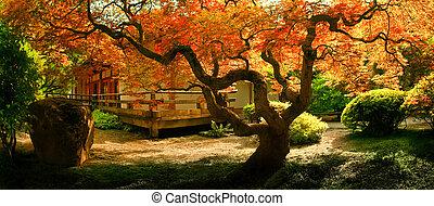 träd, in, en, asiat, trädgård