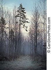 träd, in, vinter