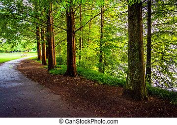 träd, längs, a, bana, hos, piemonte, parkera, in, atlanta, georgia.