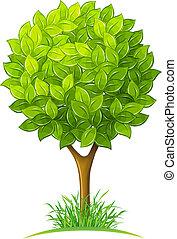träd, med, grönt lämnar