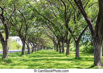 träd, med, sol lätta, in, publik parkera