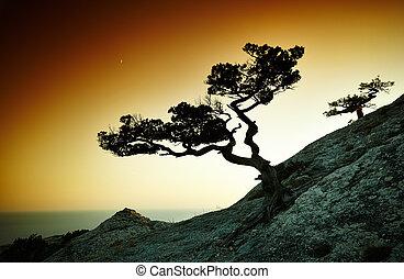 träd, och, hav, hos, sunset., crimea, landskap