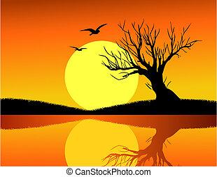 träd, och, solnedgång