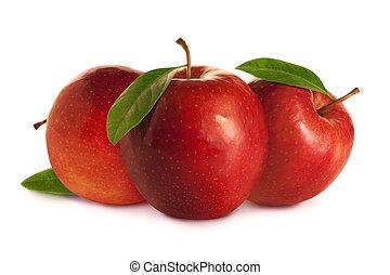 träd, röda äpplen, med, bladen