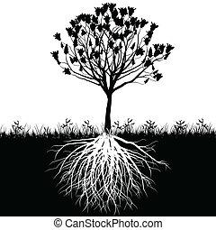 träd, rötter, silhuett