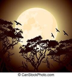 träd, silhouettes, grenverk, måne
