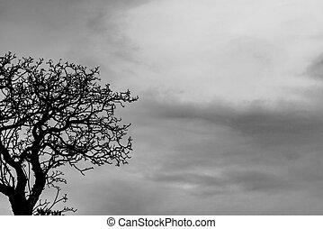 träd, silhuett, bakgrund, natur, despair., sky, trist, grenverk, död, ensam, grå, bakgrund., hopplös, träd., svart, struktur, filial, död, konst, halloween, dag