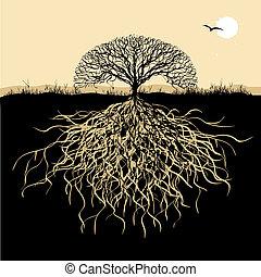 träd, silhuett, med, rötter