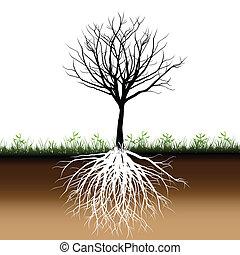träd, silhuett, rötter