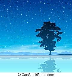träd, sky, natt
