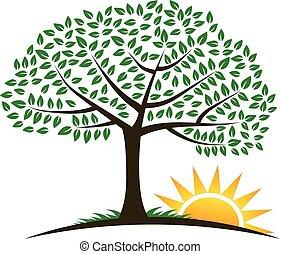 träd, soluppgång, vektor, logo