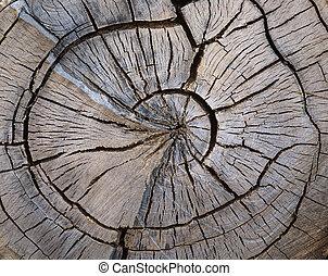 träd, splittring, snabel