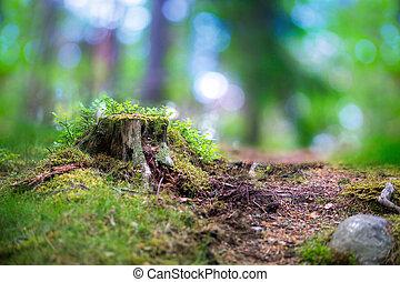 träd stövla, in, skandinav, skog