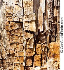 träd, struktur