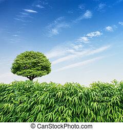 träd, under, blåttsky