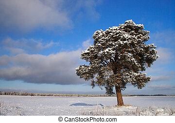 träd vinter