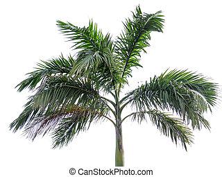 träd, vit, palm, isolerat, bakgrund
