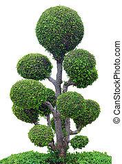 träd, vita, bakgrund