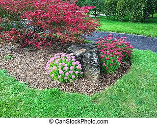 Trädgård, färgrik, blomning