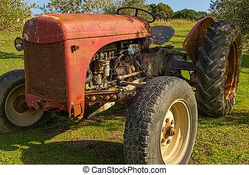 trädgård, sätta, rostning, röd, nära, traktor