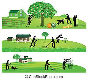 trädgårdsarbete, skörda