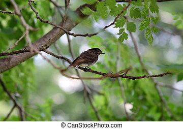 træ, fugl