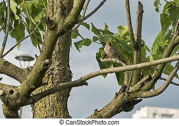 træ, fugl, branch